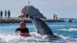Soul in the Sea - Protecting Moko the Dolphin